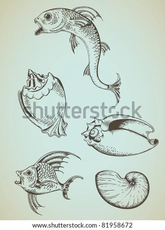 vintage hand drawn vector fish and marine shells - stock vector