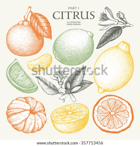 Vintage Ink hand drawn collection of citrus fruits sketch. Vector illustration of highly detailed citrus fruits in pastel colors - stock vector