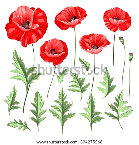 Vintage poppy set wedding flowers bundle stock vektr 394275568 vintage poppy set wedding flowers bundle flower collection of watercolor detailed hand drawn poppies mightylinksfo