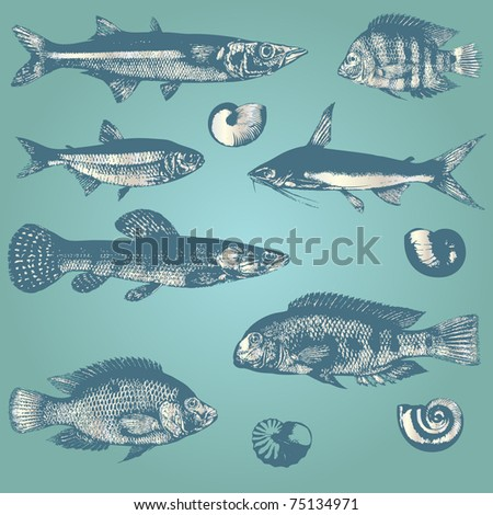Vintage set of fishes and shells - stock vector