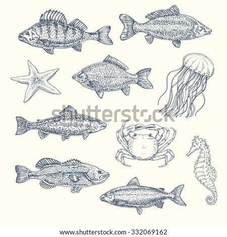Vintage set of sea creatures: fish, starfish, seahorse, jellyfish, crab. hand drawn illustration, sketch... - stock vector