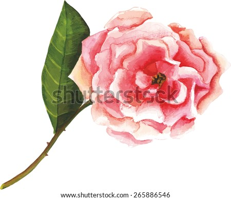 Vintage-styled pink rose, scalable vector drawing - stock vector