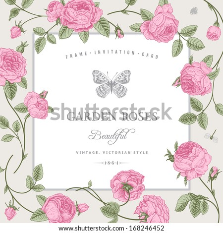 Vintage vector card with beautiful pink garden roses on a gray background. Victorian style. - stock vector