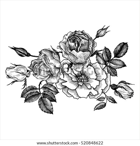 Hand Drawn Rose Vector Etch Style Stock Vector 648658468