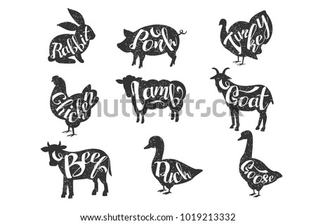 Search P2 likewise Lamb Cuts Poster in addition Chicken silhouette together with Butcher further Meat diagram. on cuts of meat poster