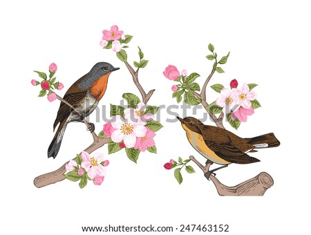 Vintage vector spring card. Birds on a branch of apple blossoms pink flowers. - stock vector