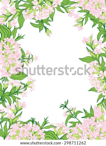 Vintage vector vertical invitation card. Colorful blooming flowers of saponaria. - stock vector