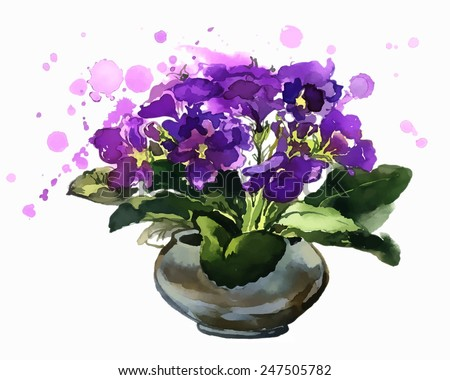Violet flowers in a pot.  African violets. Spring flowers. Watercolor. This illustration is a great choice for Wedding, Birthday, Valentine, children book and magazine decoration. VECTOR. - stock vector
