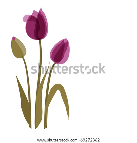 Violet tulip on the white background - stock vector