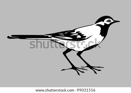 wagtail silhouette on gray background, vector illustration - stock vector