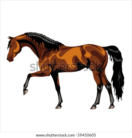 Walking bay Arabian stallion on a white background - stock vector