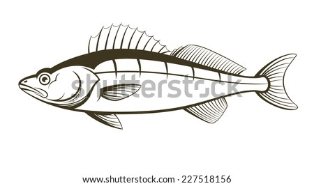 Walleye Fishing Pictures Walleye Fish Outline Engraving