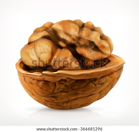 Walnut in shell vector icon - stock vector
