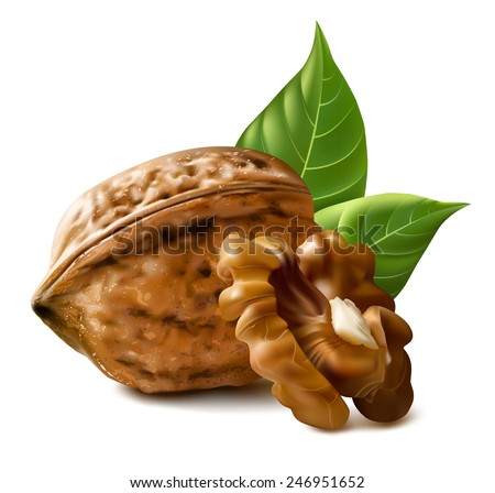 Walnuts with leaves and kernel walnut. Vector illustration. - stock vector