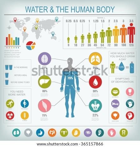 Water and human body infographic. Useful information about water. Concept of healthy lifestyle. Drink more water. Vector image.
