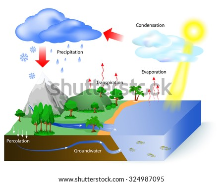 Water cycle diagram sun which drives stock vector 324987095 water cycle diagram the sun which drives the water cycle heats water in ccuart Choice Image