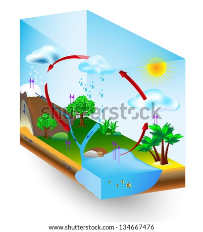 Water Cycle Stock Images Royalty Free Images Amp Vectors