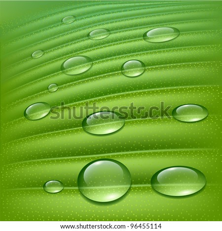 Water drops on fresh green - stock vector