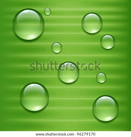 Water drops on green  leaf - stock vector