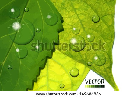 water drops on green leaf. Vector - stock vector