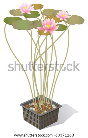 Water lilies in planter container - stock vector
