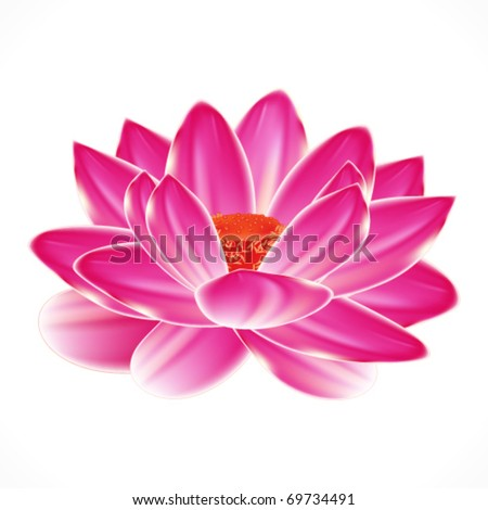 Water lily flower, isolated element to your spa design. - stock vector
