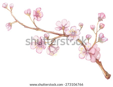 Watercolor apricot branch.
