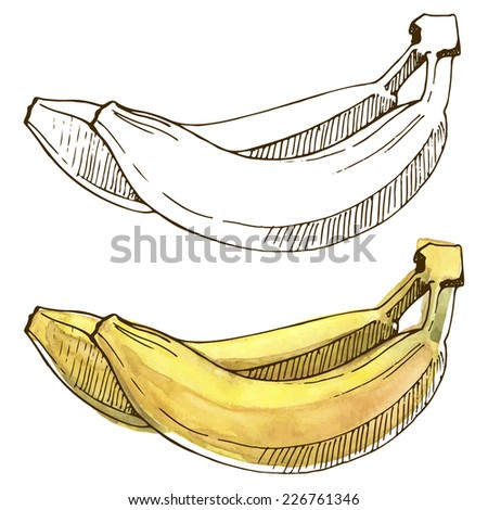 Watercolor bananas. Vector illustration with fruits painted in watercolor. - stock vector