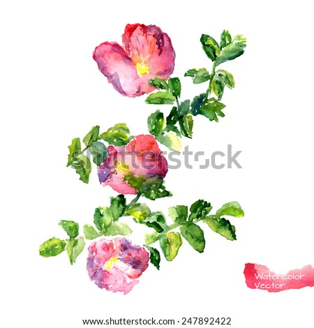 Watercolor blooming flowers and branches of wild rose. Editable vector illustration. - stock vector