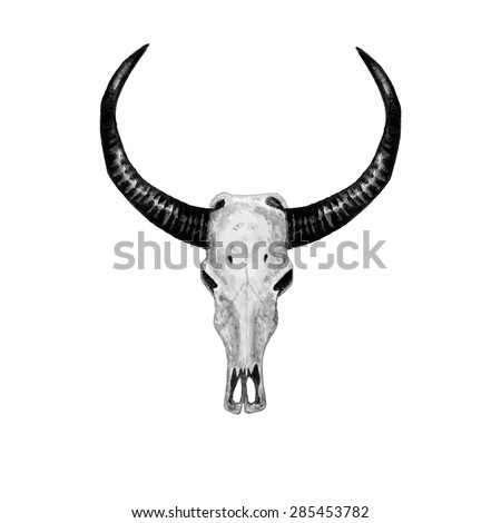 Watercolor Buffalo Skull, isolated on white background. Vector Element for your design. Hand drawn illustration. Black and White style. Ethnic themed design.