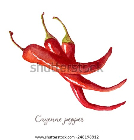 Watercolor cayenne pepper hand drawn, eps10 - stock vector