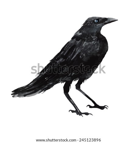 Watercolor crow. Hand drawn artistic blackbird. Single isolated raven illustration in vector