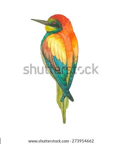 Watercolor European bee-eater bird (Merops apiaster), vector illustration. - stock vector