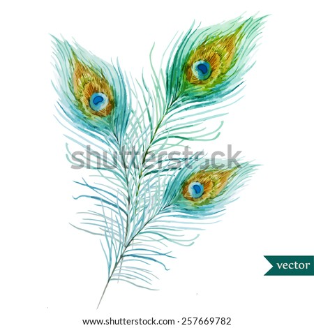 watercolor, feathers, peacock, - stock vector