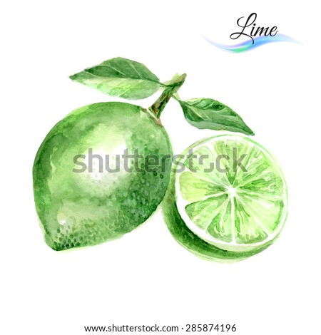 Watercolor fruit lime isolated on white background - stock vector