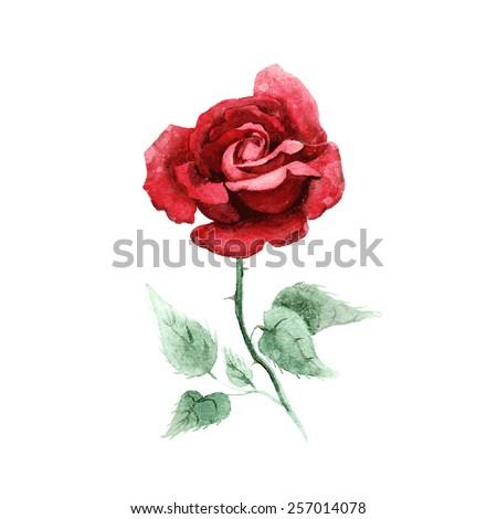 Watercolor hand drawn vector rose 257014078 watercolor hand drawn vector rose voltagebd Gallery