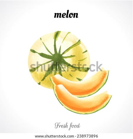 Watercolor illustration of a painting technique. Fresh organic food. Melon fruit. - stock vector