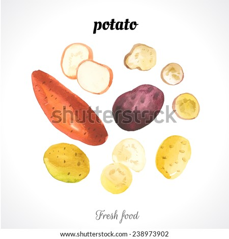 Watercolor illustration of a painting technique. Fresh organic food. Provencal style. Different varieties of potatoes. Set of vegetables. - stock vector