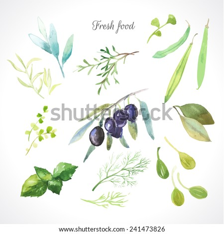 Watercolor illustration of a painting technique. Fresh organic food. Set of different herbs. Olives, rosemary, sage, tarragon, capers, dill, beans and bay leaf - stock vector