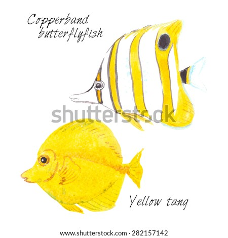 Watercolor illustration of two exotic fishes: Copperband butterflyfish and Yellow tang. Vector illustration on white background.