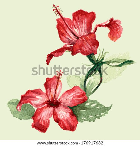 Watercolor image of red hibiscus flowers. - stock vector