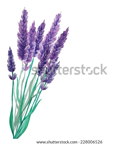 Watercolor lavender bouquet background. Frame with hand painted vintage plants. Vector illustration. - stock vector