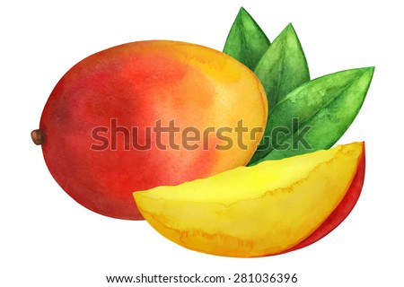 Watercolor mango fruit whole, slice and leaves closeup isolated on white background. Hand painting on paper