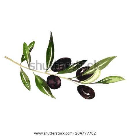 Watercolor olive branch isolated on white background