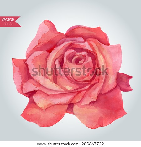 Watercolor painting rose. Vector illustration. - stock vector