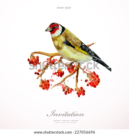 watercolor painting wild bird on branch rowan. vector illustration. template for your design - stock vector