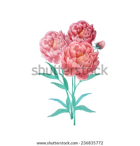 Watercolor peony flowers bouquet. Vintage hand drawn illustration in vector - stock vector