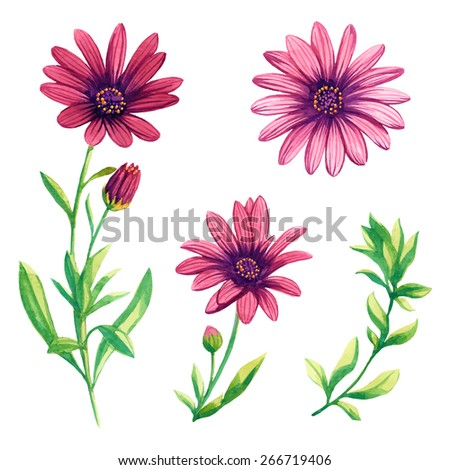 watercolor pink chamomile set - stock vector