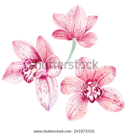 Watercolor pink Orchid flowers isolated on white background. Vector illustration