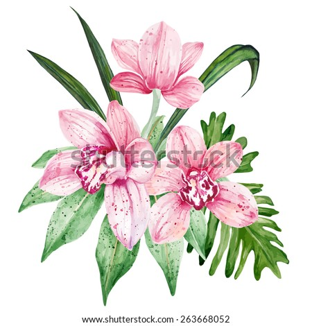 Watercolor pink Orchid flowers. Vector illustration